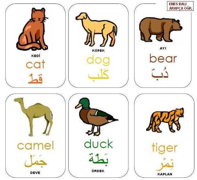 Hayvanlar حيوانات